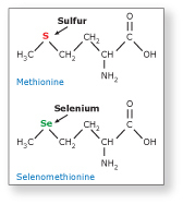methionine and selenomethionine